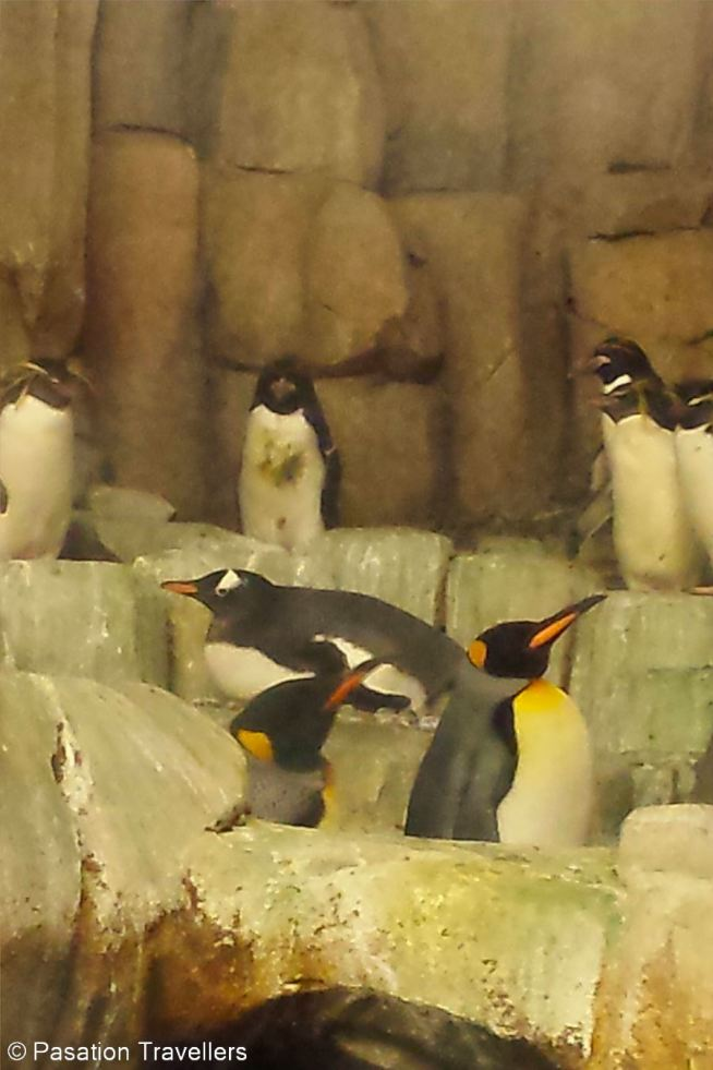 winter-in-montreal-48-hours-family-adventure-biodome-penguin-hatchling